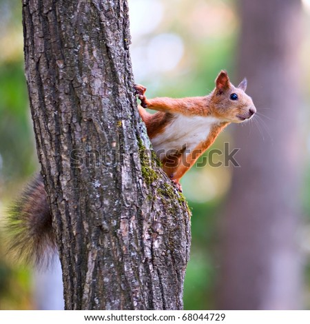 Curious squirrel in the Autumn park - stock photo