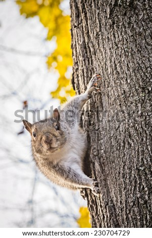Curious squirrel on tree trunk in autumn macro - stock photo
