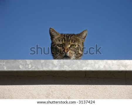 Curious tabby cat - stock photo