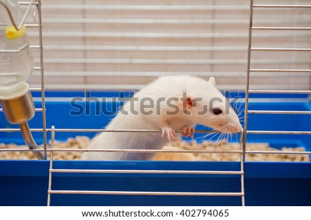 Curious white rat looking out of a cage (selective focus on the rat paws) - stock photo