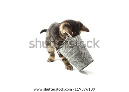 Curious young cat playing with zinc bucket isolated over white - stock photo