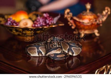 curled snake on wood table and dish with fruits - stock photo