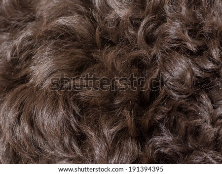 curly dog hair texture - stock photo