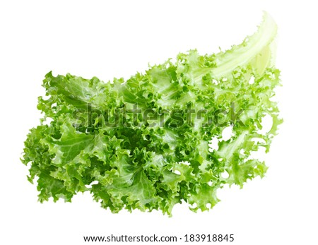 Curly Endive chicory salad isolated on white background - stock photo
