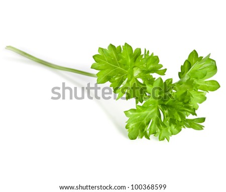 Curly parsley , isolated on a white background - stock photo