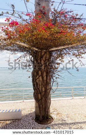 curly plant with thorns and flowers on stone pillar