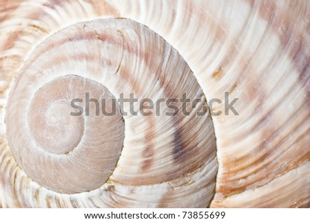 curly shell texture - stock photo
