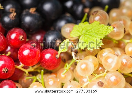 Currants types - white, red and black berries - stock photo