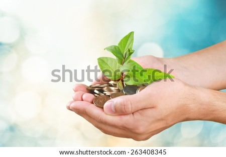 Currency. Money tree growing from a pile of coins in hands - stock photo