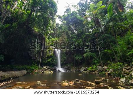 Springbrook Tamborine Rainforest Tour