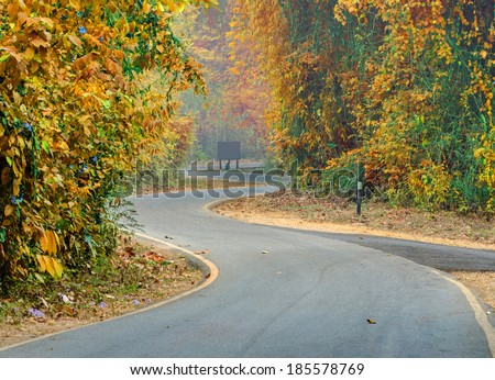 curve of the colorful road in forest.