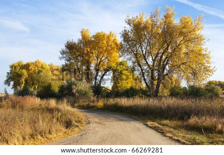 Curved dirt road in autumn on the colorado prairie, with majestic yellow-foliaged cottonwood trees. - stock photo