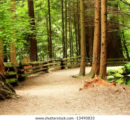 curved foot path on a forest of tall trees - stock photo