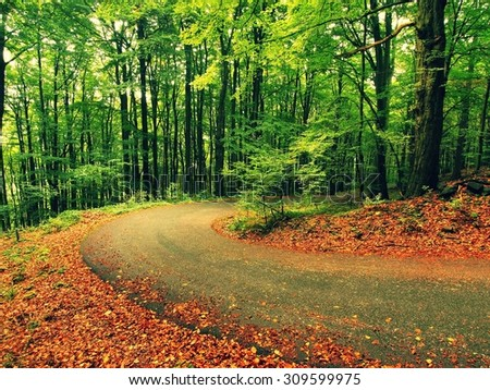 Curved path bellow beech trees. Spring afternoon in forest after rainy day. Retro effect. - stock photo