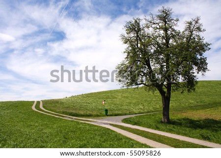Curved path on grass field with tree - stock photo