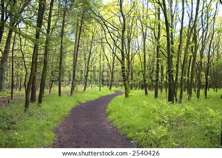 Curved path through wood in spring - stock photo