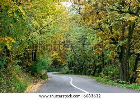 Curved rural road in the middle of wood