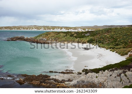 Curved sandy beach of Gypsy Cove in the Falkland Islands. The cove is home to a colony of Magellanic Penguins (Spheniscus magellanicus) and is close to the Stanley, capital of the Falkland Islands. - stock photo