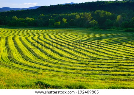 Curving field of harvested crop on farmland in Stowe Vermont, USA - stock photo