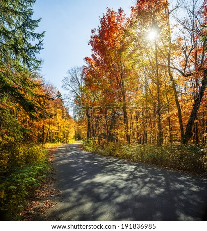 Curving road in a colorful fall forest with sun and shadows. Algonquin Provincial park, Ontario, Canada. - stock photo