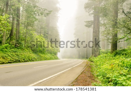Curving Road Through a Misty Forest - stock photo