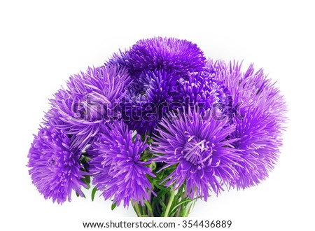 Curvy needle vibrant dark cobalt asters isolated on white background with clipping path. Close-up view with space for text  - stock photo