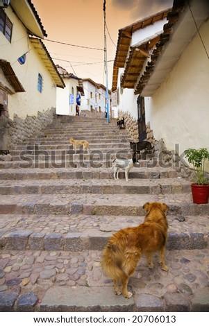 Cusco dogs - stock photo