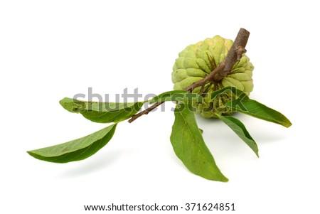 Custard apple isolated on white background - stock photo