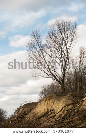 cut down forest, forestry logging   - stock photo