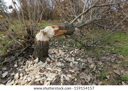 cut down tree in forest