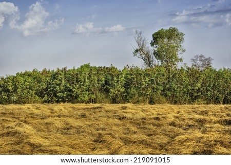 Cut, dry grass, trees and sky - stock photo