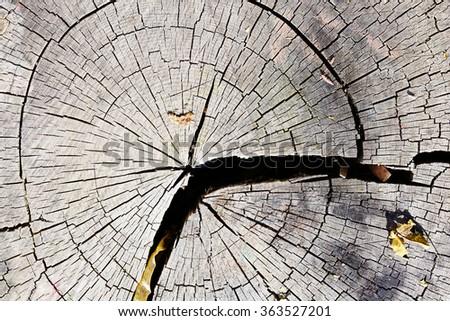 cut invoice of a tree - stock photo