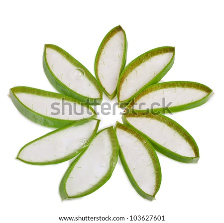 cut leaf aloe vera isolated on white background