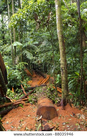 Cut log and sawdust left on the rainforest floor by timber traffickers - stock photo