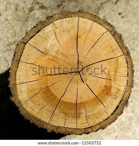 Cut log, woodgrain background texture - stock photo
