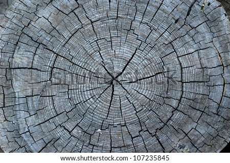Cut of old grey tree with some cracks