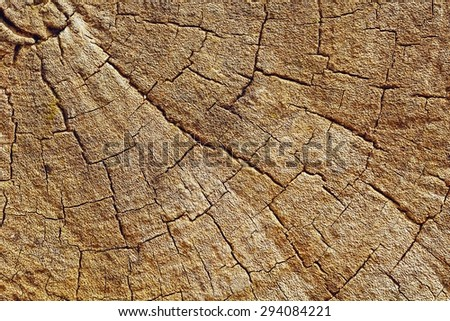 Cut of old trunk is photographed closely. The core of tree consist of growth rings and deep cracks.