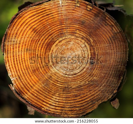 cut pine logs with annual rings - stock photo