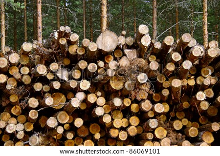 Cut pine tree trunks of different sizes stacked up for renewable energy or for producing pulp. - stock photo