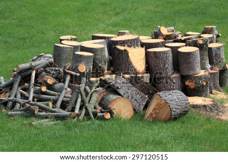 Cut Pine wooden logs over green grass - stock photo