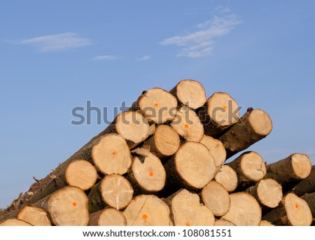 Cut spruce fir tree logs in pile on background of blue sky. Timber industry. - stock photo