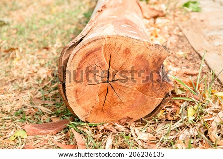 Cut timber logs in park - stock photo
