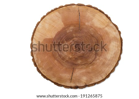 cut tree growth ring