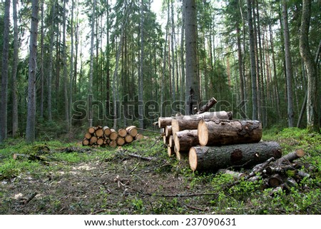 cut tree logs piled up - stock photo