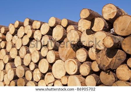 Cut tree stumps background - stock photo
