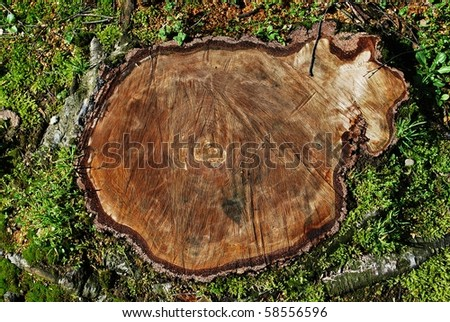 Cut tree trunk in the grass, aerial view - stock photo
