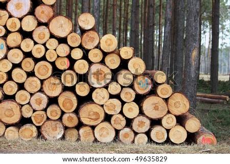 cut trees - stock photo