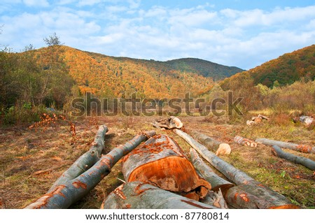 Cut trees are beech, in a clearing on a background of mountains