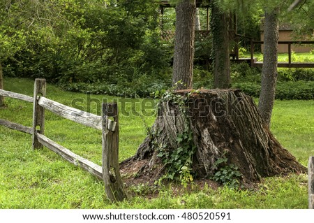 Cut trunk of big tree and wooden fence in park meadow