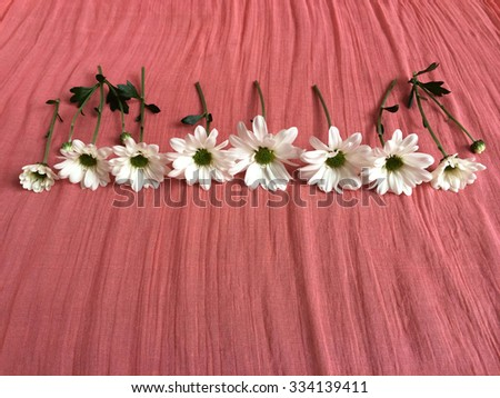 Cut white daisies on a pink colored background - stock photo